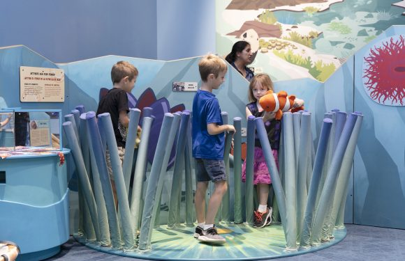Wild Kratts OCEAN ADVENTURES the Exhibit